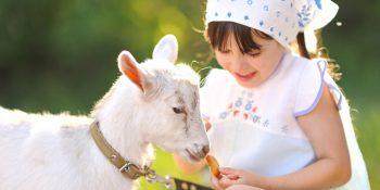 Les bienfaits du lait de chèvre